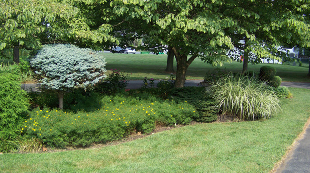 Maryland landscaping and lawn services